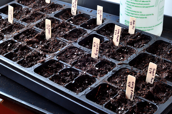 seeds planted and labeled