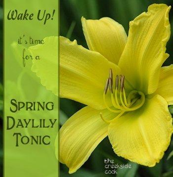 daylily tonic