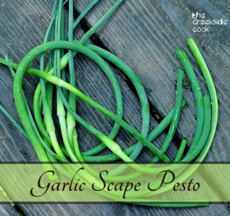 header_garlic_scape_pesto