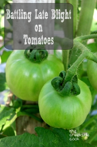 battling late blight on tomatoes
