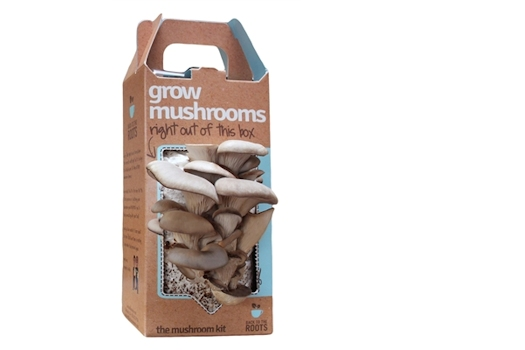 mushroom growing kit