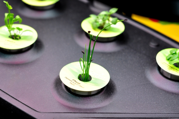 chive seedlings in my AeroGarden on The Creekside Cook