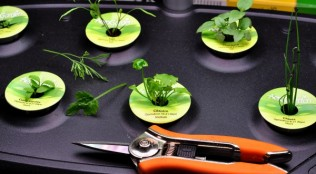 read about the Aerogarden on The Creekside Cook