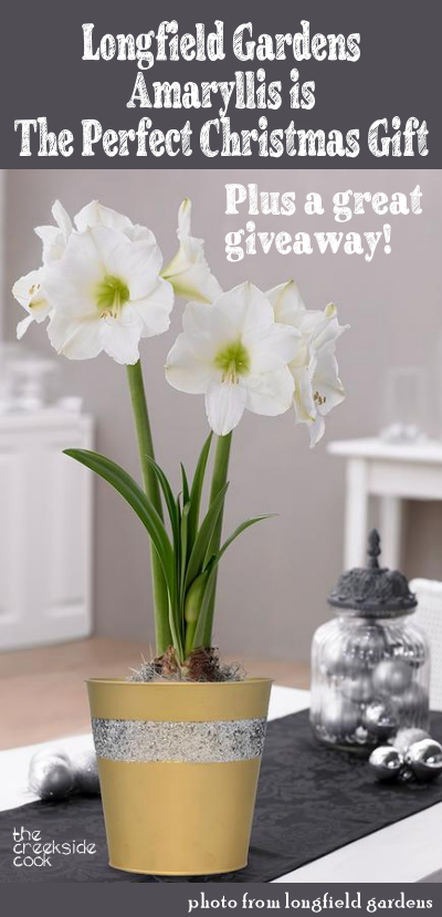Longfield Gardens Amaryllis Giveaway on The Creekside Cook