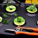 Gardening all Year with AeroGarden